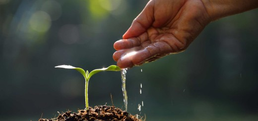 letting-seed-grow